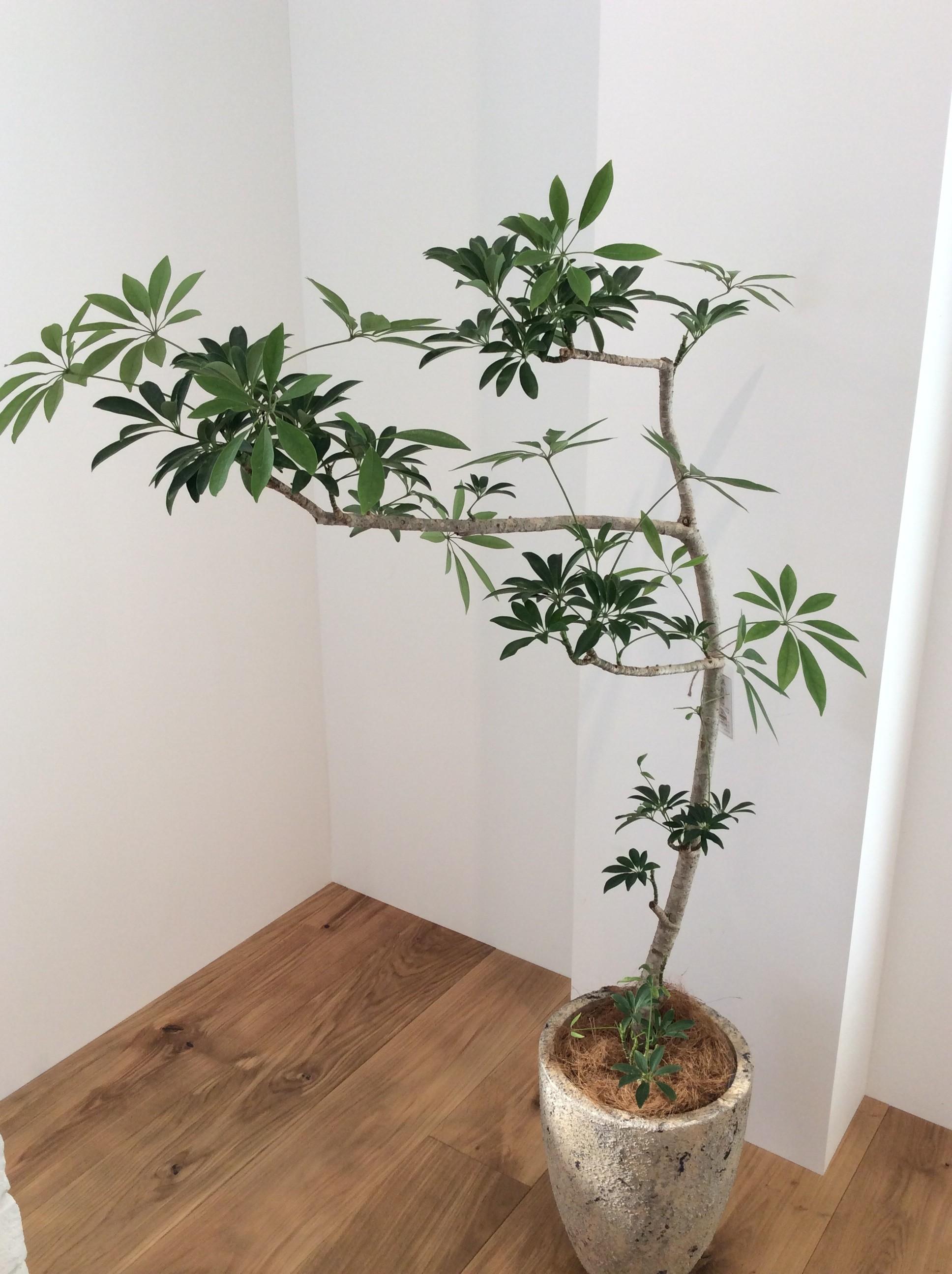 インテリアとしても人気の観葉植物 育てやすい観葉植物はどれ?のサムネイル画像