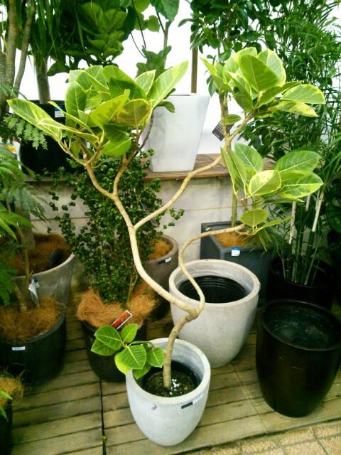 インテリアとして人気の観葉植物 沖縄県で人気の販売店はどこ?のサムネイル画像