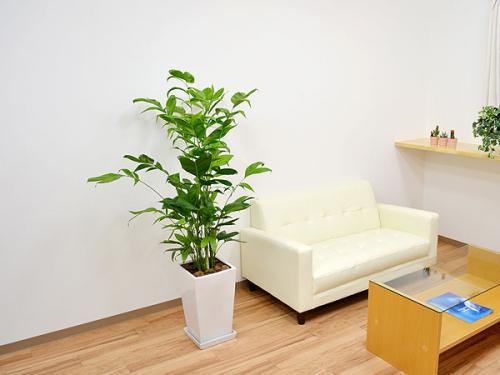【インテリアに華を】屋内でも育てられるオススメの観葉植物4選のサムネイル画像