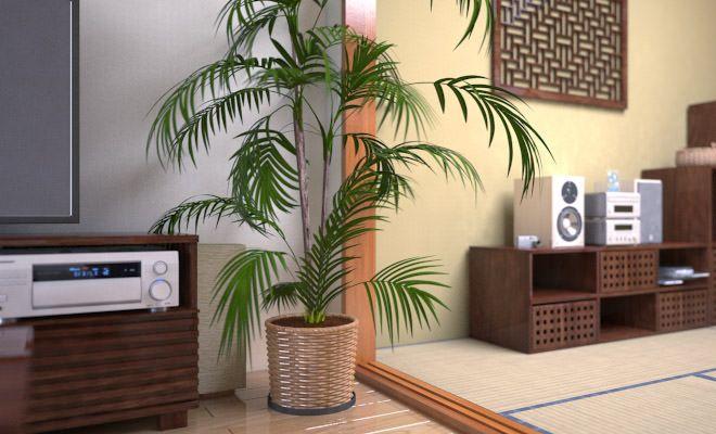おうちでアジアン気分が楽しめる!アジアンテイストな観葉植物4選のサムネイル画像