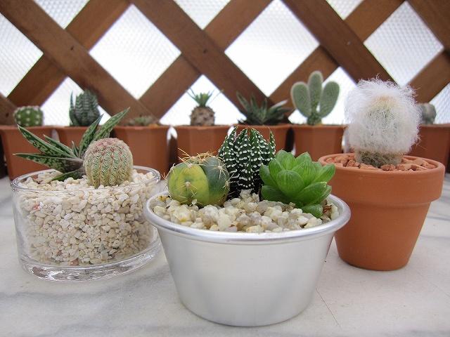 可愛らしくて癒される、多肉植物の鉢植え。鉢選びのポイントは?のサムネイル画像