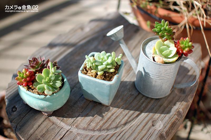 癒しグッズとしてもオススメ♪可愛らしい多肉植物の鉢植え紹介!のサムネイル画像