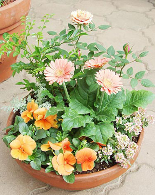 一つの鉢でいろいろな植物を育てる寄せ植え。作り方が知りたい!のサムネイル画像