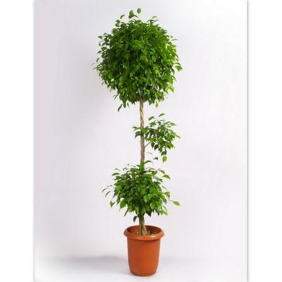 買ってきた観葉植物、せっかくだから長持ちさせたい!上手な育て方のサムネイル画像