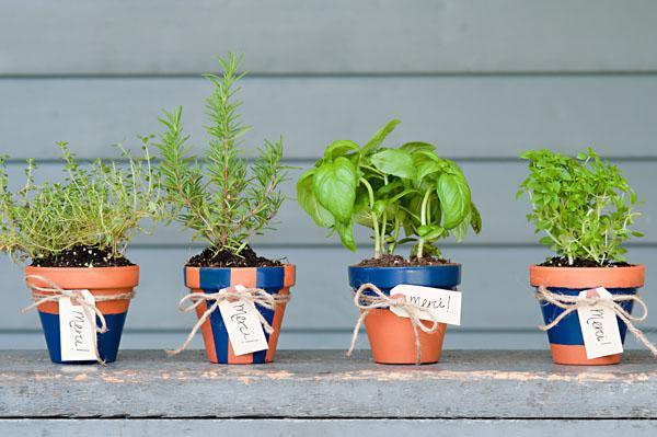 植物とともにお部屋をおしゃれに変身!おしゃれな植木鉢の紹介のサムネイル画像