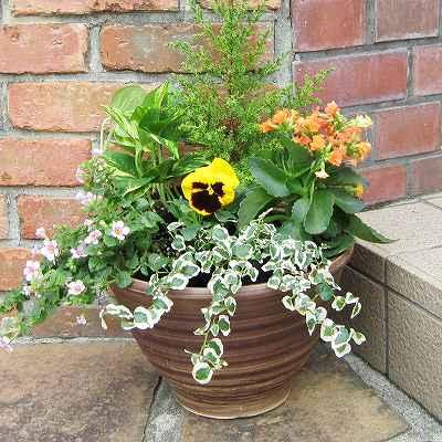 お花に、観葉植物に、サボテンにも!おしゃれな植木鉢を特集!のサムネイル画像