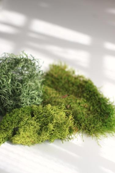 この苔をインテリアに!?モスを使って部屋をおしゃれに飾ろう!のサムネイル画像