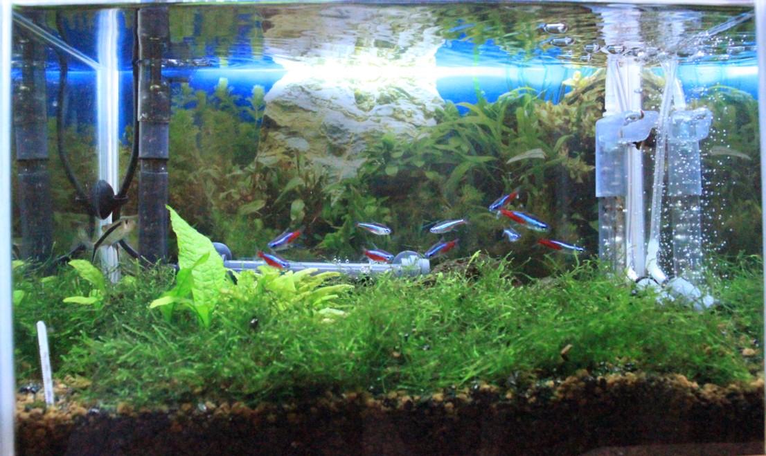 【テトラの水槽特集】金魚、メダカ、熱帯魚を飼うならテトラ水槽で!のサムネイル画像