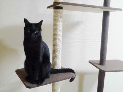 ネコ好きさんのための〈独自調査〉キャットタワー人気ランキングのサムネイル画像