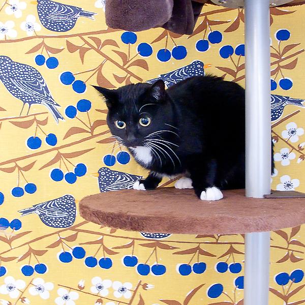 ヤンチャな猫ちゃんでも安心して使える突っ張り式キャットタワーのサムネイル画像