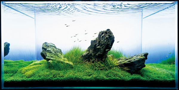 人気のアクアリウム レイアウトに使う水草の種類を紹介します!のサムネイル画像
