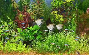 一人暮らしの方にも!癒しの熱帯魚。おすすめの種類をご紹介します!のサムネイル画像