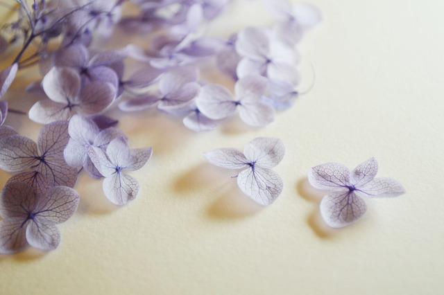 【あじさいアレンジ】生花やドライフラワーで秋冬も紫陽花を楽しもうのサムネイル画像