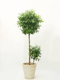 一人暮らしの部屋にはどんな植物がいい?癒される植物を紹介します。のサムネイル画像