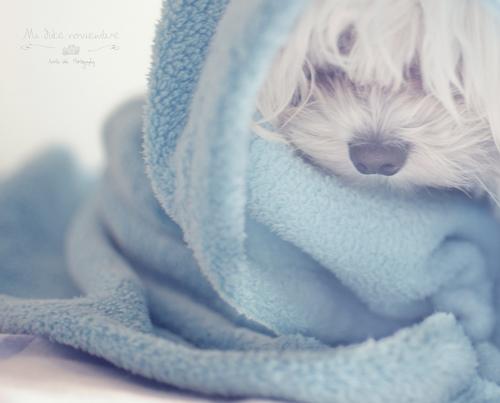 ふわふわのバスタオル♡たくさん欲しいかわいいバスタオルはこれ!のサムネイル画像