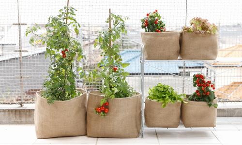 【初心者におすすめ】ベランダで育てる野菜。収穫を楽しみましょう!のサムネイル画像