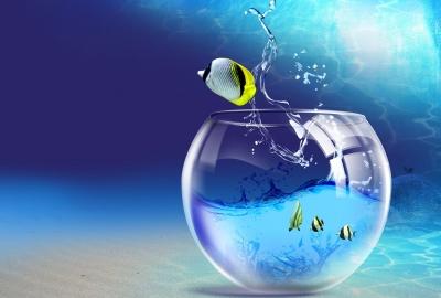 熱帯魚を飼育してみたい、お洒落なインテリアにもおすすめです。のサムネイル画像