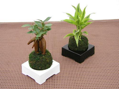 おしゃれなインテリアに!かわいらしいミニ観葉植物の育て方のサムネイル画像