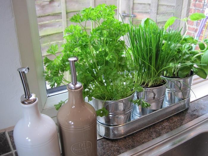 おしゃれで簡単、実用的なハーブの園芸をおうちで始めてみませんかのサムネイル画像