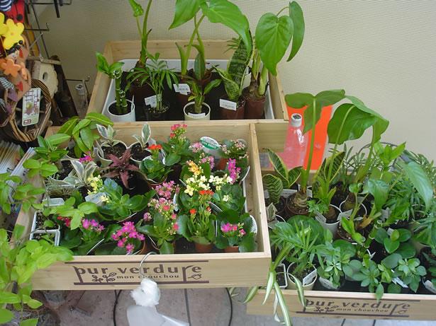 【定番】家庭菜園初心者さんが作りやすい野菜3種類をご紹介♡のサムネイル画像