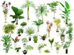 癒しのインテリア☆観葉植物 どんな種類があるのか気になる!!のサムネイル画像