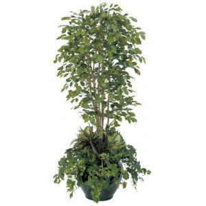 優し気な葉が人気!観葉植物ベンジャミンすぐ葉が落ちて枯れる?のサムネイル画像