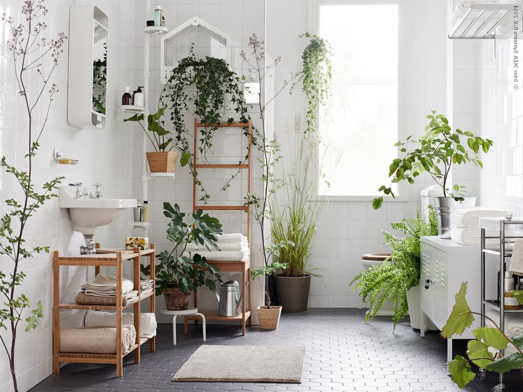 室内に癒しのグリーンを!暗めの室内でも元気な植物を紹介しますのサムネイル画像