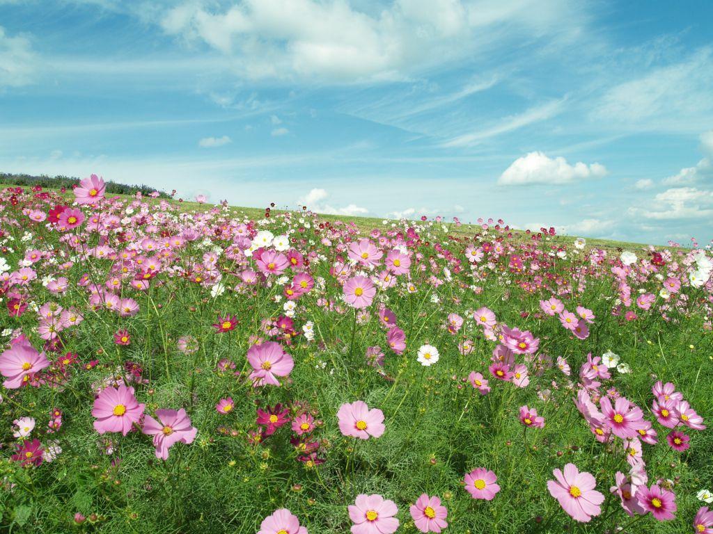 まだまだ見頃も多い10月の花、あなたはどのくらい知っていますか?のサムネイル画像