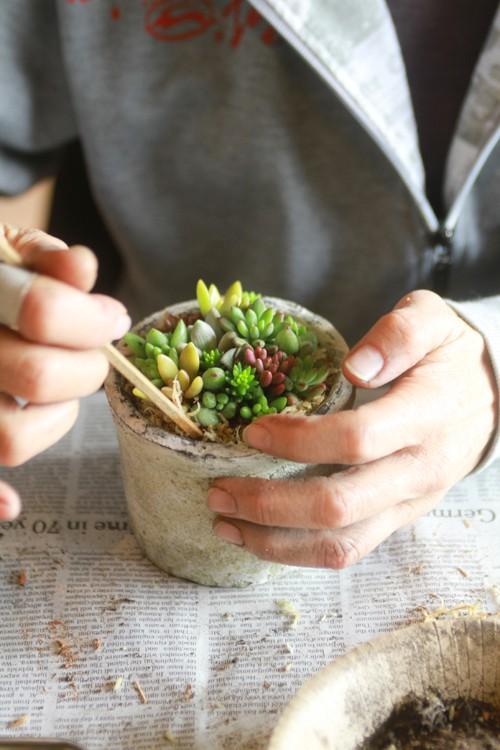 センス溢れるグリーンインテリア。多肉植物のプロが作る寄せ植えのサムネイル画像