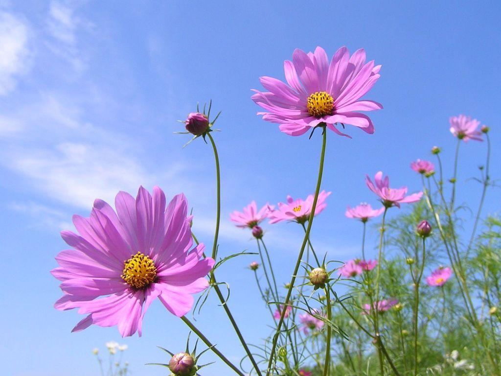 9月に咲く花や植えるのにおススメの花!素敵な9月の花のまとめのサムネイル画像