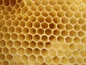 春からそろそろ蜂の動きがはじまる。注目すべき蜂の巣の種類のサムネイル画像