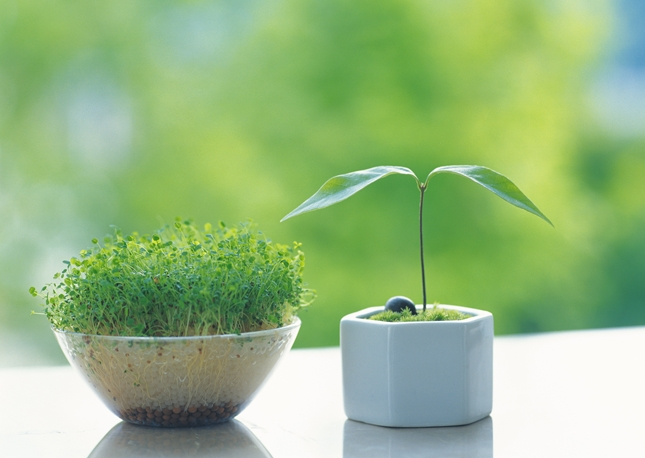 インテリアグリーンも家庭菜園も楽しめる水耕栽培を自作しよう♪のサムネイル画像