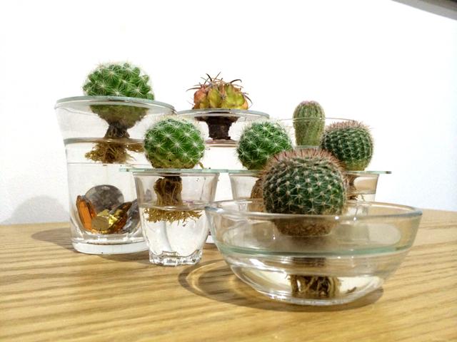 可愛い我が子を増やしたい?!植物の増やし方お教えします!のサムネイル画像
