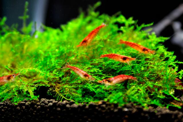 初心者が水槽からはじめるアクアリウムの世界をご紹介しますのサムネイル画像
