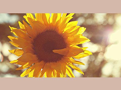 ガーデニング初心者さんは育てやすい苗からチャレンジしよう!のサムネイル画像