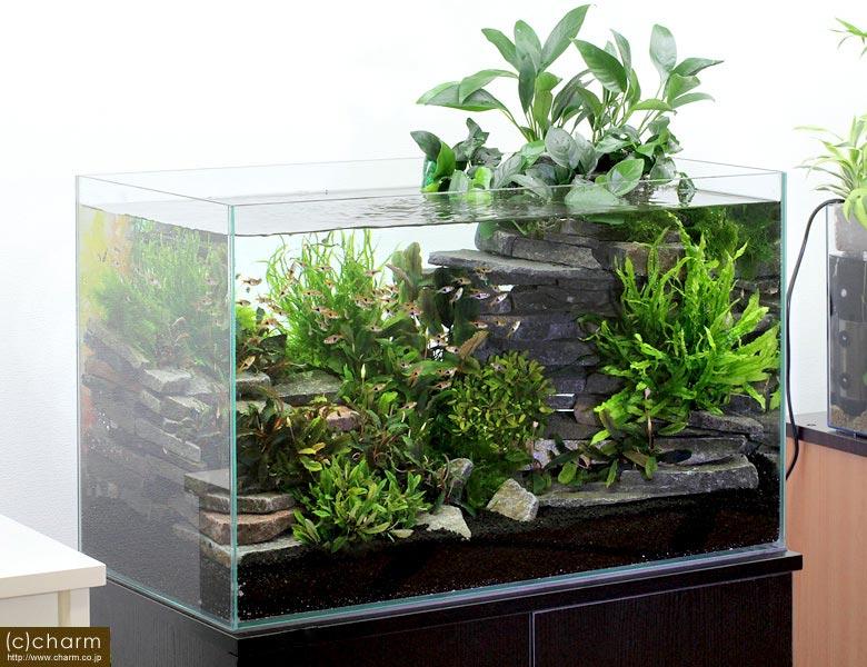 【アクアリウムレイアウト】初心者にオススメな水草を紹介します。のサムネイル画像