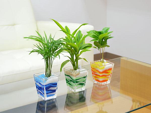 育てやすい観葉植物って何がある?人気の観葉植物を紹介します。のサムネイル画像