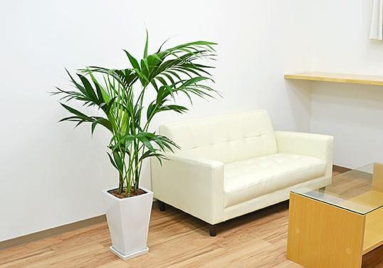 観葉植物人気ランキングを発表!今売れている観葉植物とは?のサムネイル画像