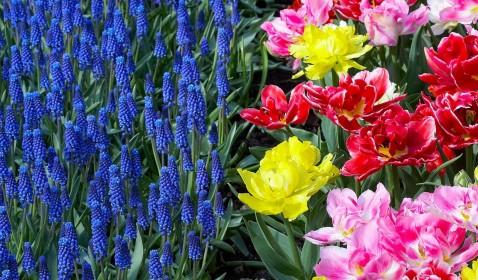 春の庭を美しく花で染めましょう!育てやすい秋植え球根7選のサムネイル画像