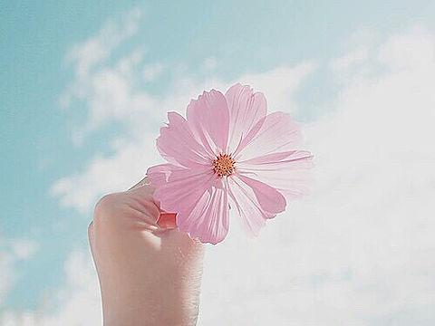 【植え方編】簡単!お庭やベランダでガーデニングを始めよう♡のサムネイル画像