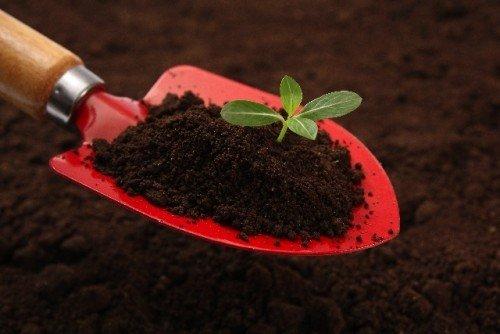 おすすめのガーデニングの土を紹介!まずは基本から!定番商品まとめのサムネイル画像