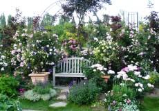 極上の色と香りに包まれて・・・。バラのガーデンの画像をご紹介しますのサムネイル画像