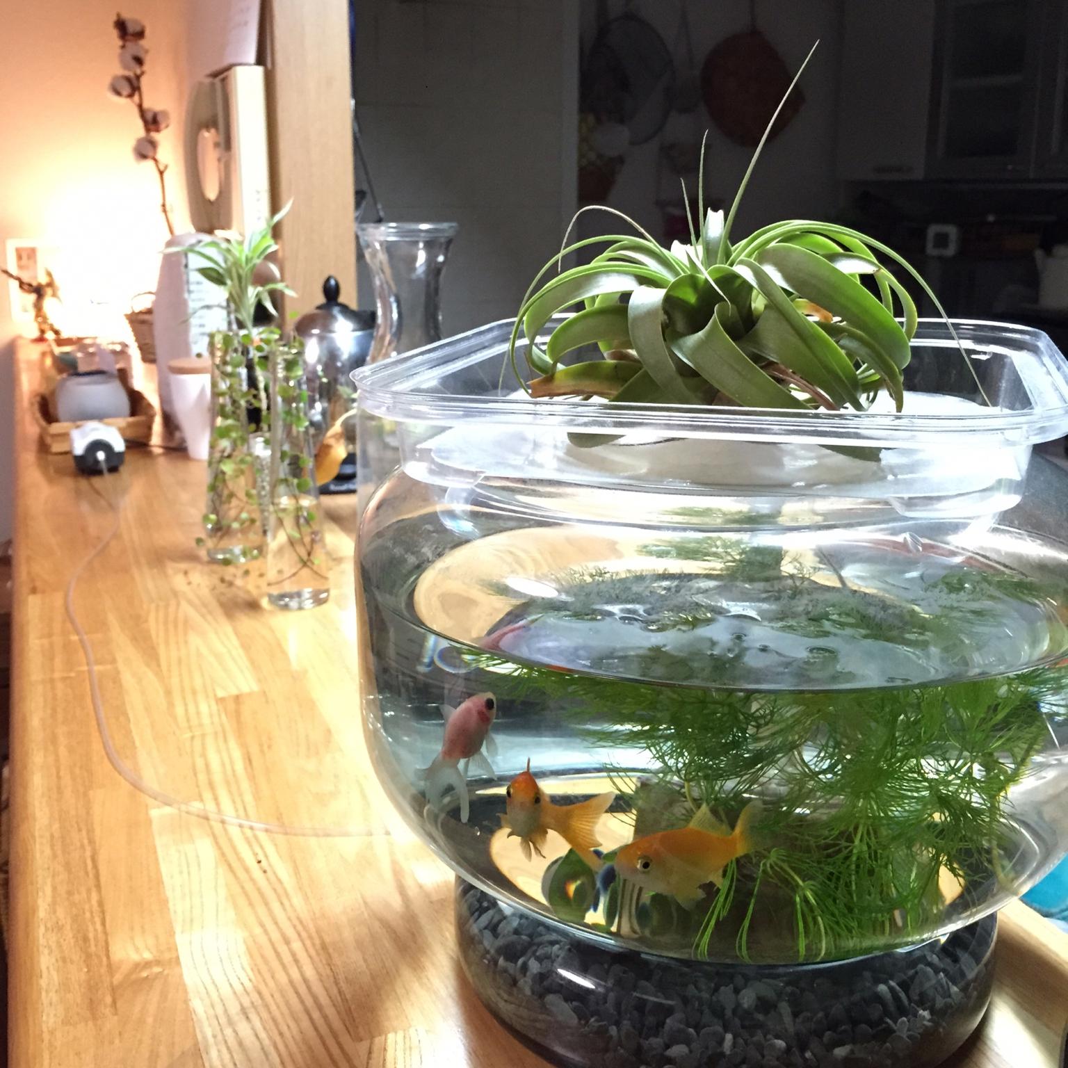 観葉植物と水槽を置いて水と緑の癒しのパワーをゲットしましょう!のサムネイル画像