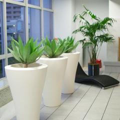 観葉植物をリースしてお部屋に彩りと癒しを演出してみませんか♪のサムネイル画像