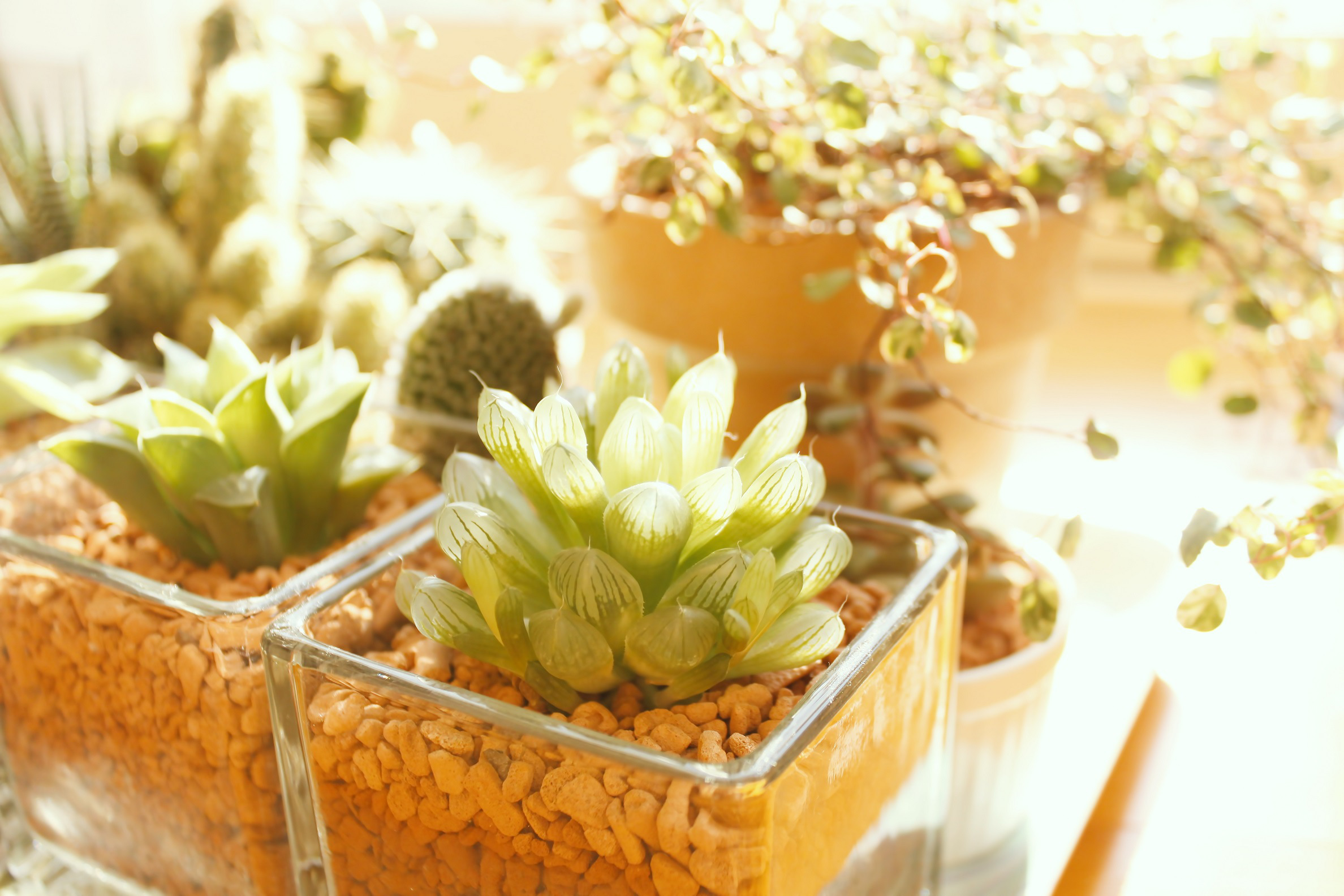 植物で日々の疲れも解消!初めてでも植物を元気に育てる方法。のサムネイル画像