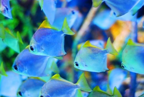 意外と簡単♪ゆったり泳ぐ淡水の熱帯魚を飼育して癒されちゃおう♪のサムネイル画像