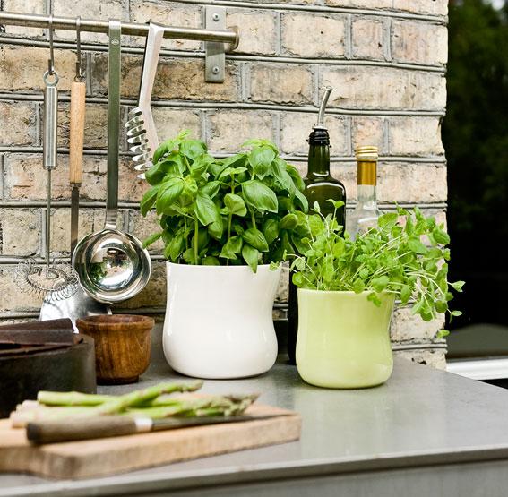 栄養満点!豆苗の育て方!お手軽キッチン菜園はじめませんか。のサムネイル画像