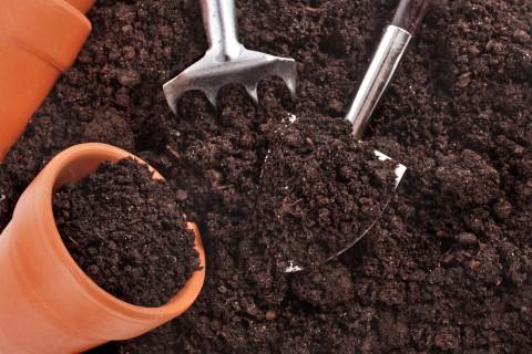 観葉植物を長く楽しむために!観葉植物の土づくりについてまとめ!のサムネイル画像