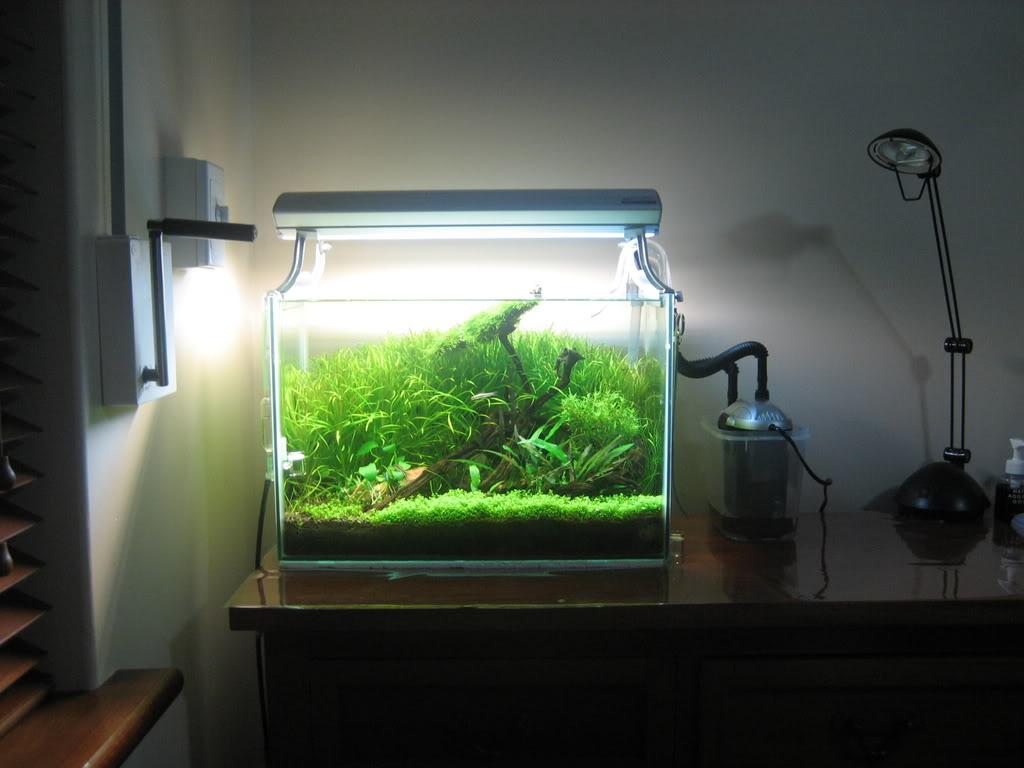 【45cm水槽特集】熱帯魚、水草水槽に最適なおすすめ水槽は?のサムネイル画像