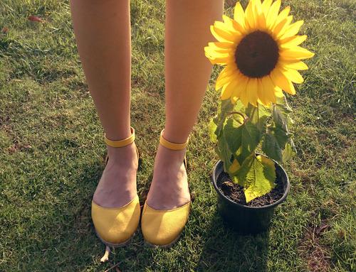 【花のある暮らし】夏の花・ミニひまわりの育て方をマスターしよう♡のサムネイル画像